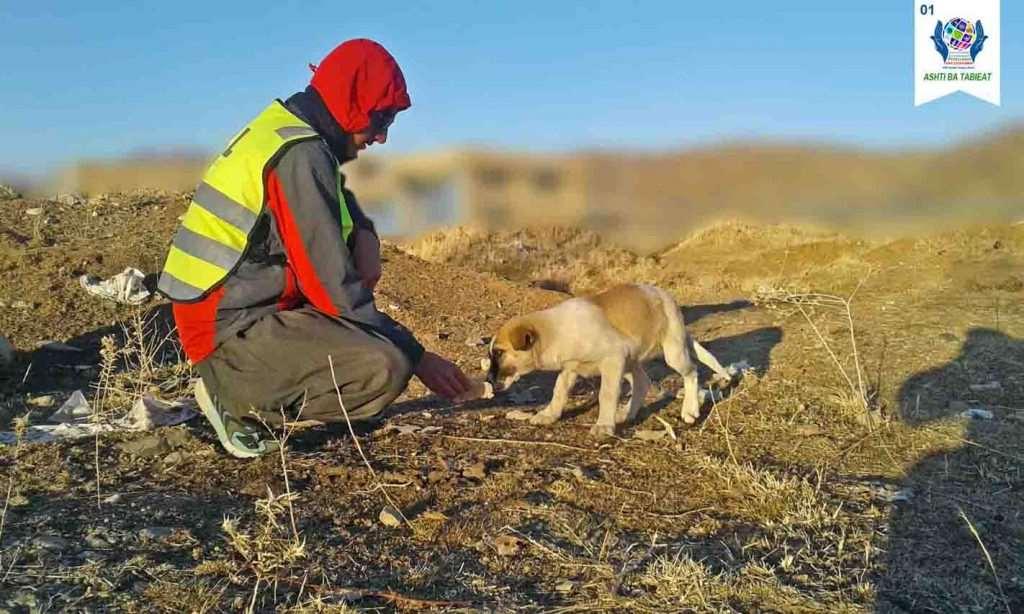 خوراک به حیوانات در اولین اردوی