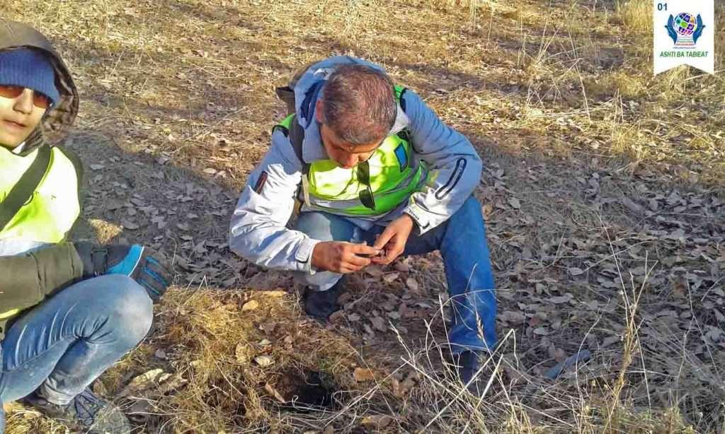 بذرکاری از نوع بلوط سبز (به روو)