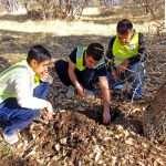بذرکاری در میان درختان کهن سال - توسط همرکابان سبز