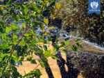 آبیاری نهالهای بلوط با پیام زندگی بر روی زمین - توسط همرکابان سبز